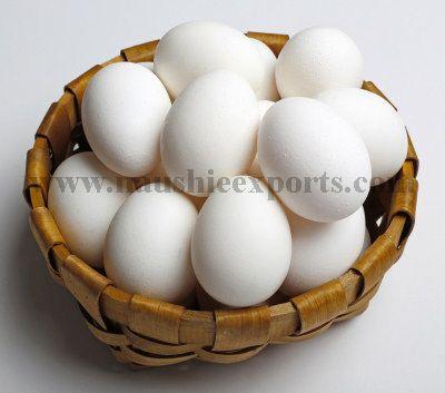 Offer To Sell Fresh Egg