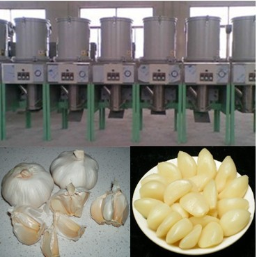 Image result for garlic peeling machine