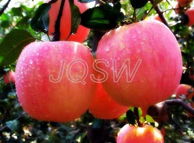 Red Fuji Apple