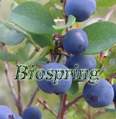 Blueberry P.E. (Origin of Material: China)