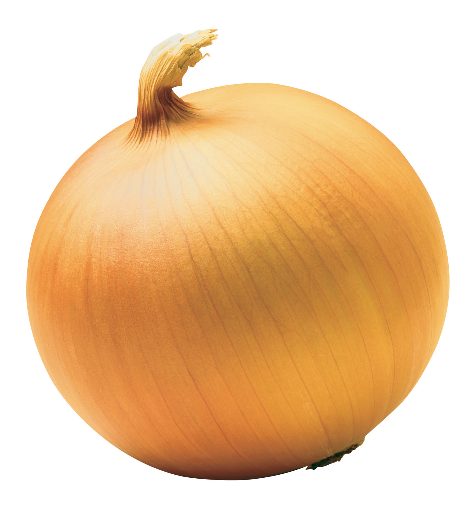 supply chinese onion