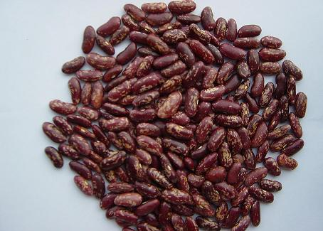 Purple Speckled Kidney Bean