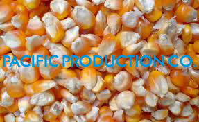VIETNAM YELLOW CORN