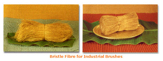 Bristle Fibre, Coconut Fibre, Machine Twisted Fibre, Geo Tex