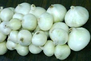 Sell white onion
